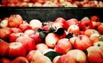 降低患病率,延缓衰老,有一种水果叫苹果!