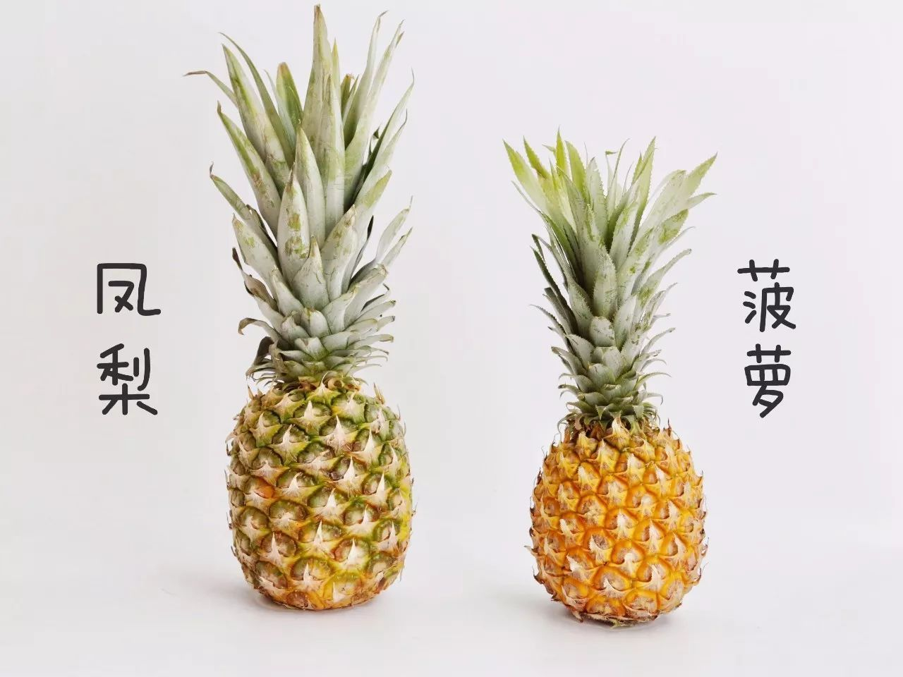 菠萝还是凤梨?不要再傻傻分不清楚了!