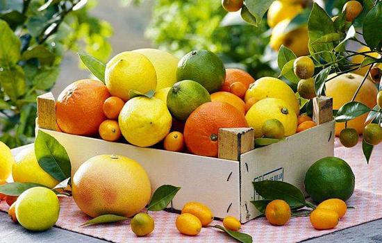 冬天这么冷,为什么柑橘类水果却这么受欢迎?
