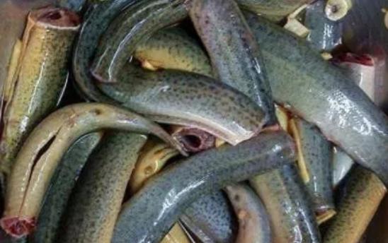 孕妇吃泥鳅有哪些禁忌要注意?