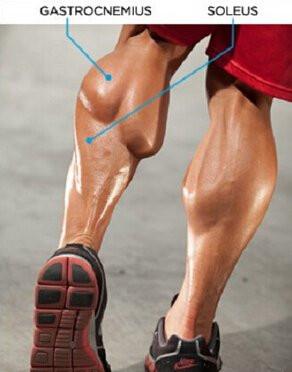 小腿肌肉训练技巧告诉你,脚尖要向内!