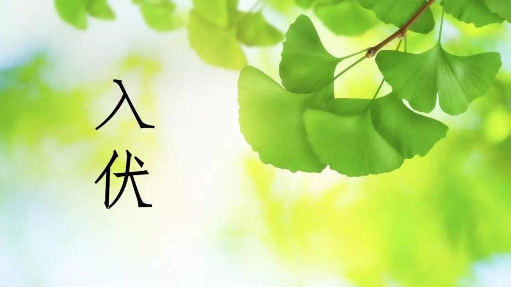 """三伏天养生要注意""""扶阳""""!"""