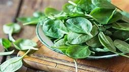 叶绿素如何获取,叶绿素的作用是什么?