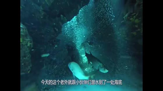 小哥潜水,在海底发现一架飞机残骸,靠近一看,彻底被镇住了!