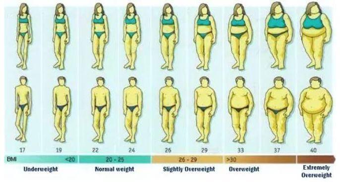 体脂率代表什么,体脂率是怎么计算的?
