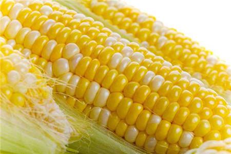 玉米能明目抗衰老?还有哪些功效?