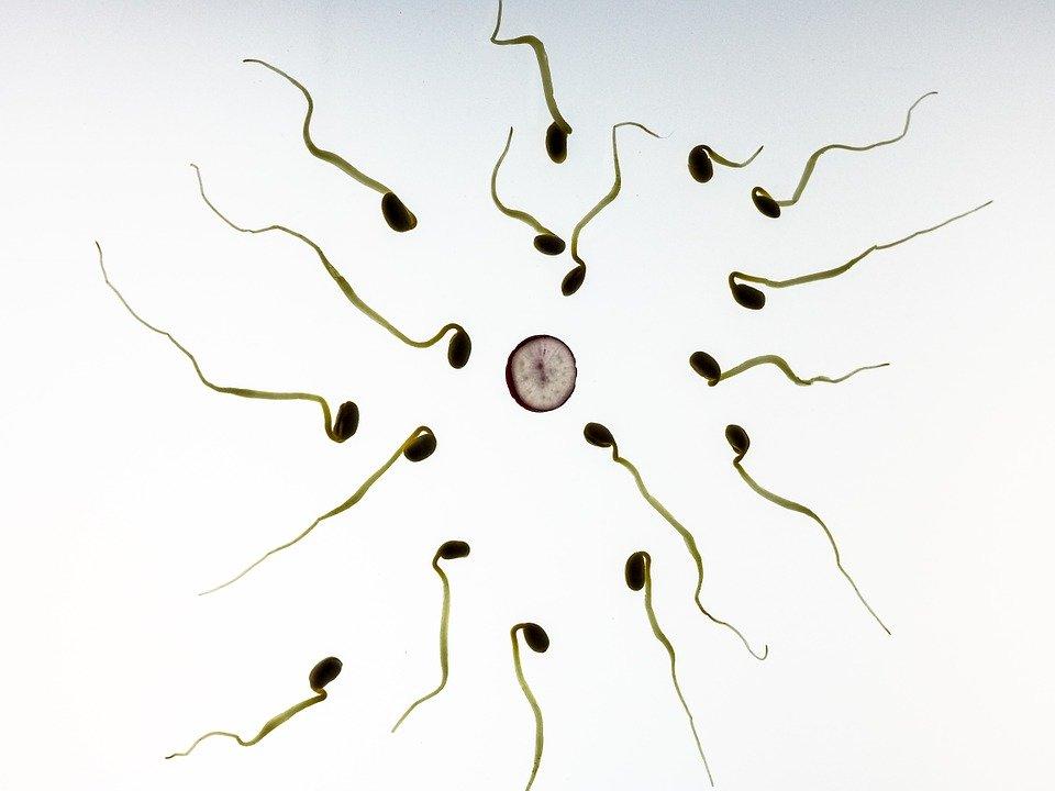 精子形态如何影响生育力?