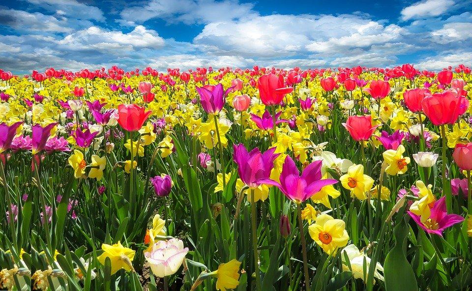 春季过敏的症状是什么,如何治疗春季过敏?