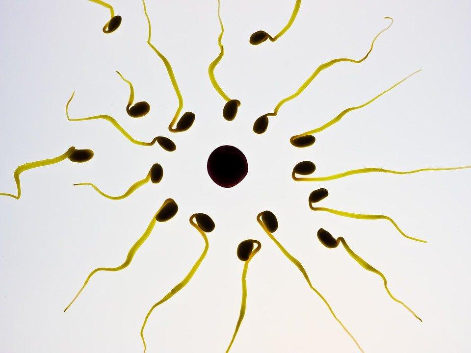 如何提高你的精子质量?