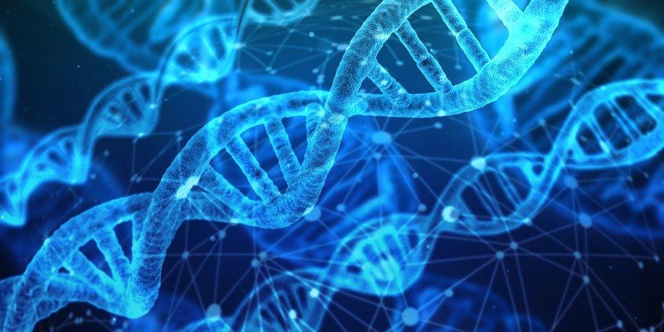 您如何评估蛋白质质量?